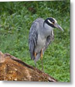 Heron On Log Metal Print