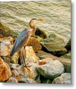 Heron On The Rocks Metal Print