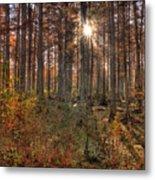 Heron Pond Cypress Trees Metal Print