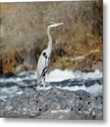 Heron The Rock Metal Print