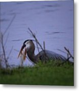 Heron Trying To Get His Fish Metal Print