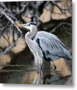 Heron Wading Metal Print