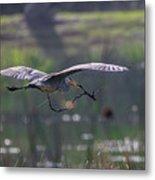 Heron With Nesting Material Metal Print