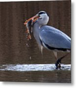Heron With Perch Metal Print