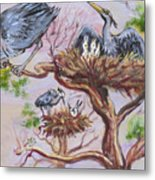 Herons At Nests Metal Print