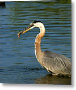 Herons Catch Metal Print
