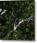 Herons Landing Metal Print