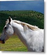 Hero's Horse-colorful Background Metal Print