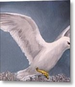 Herring Gull Metal Print
