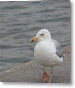 Herring Gull In Copenhagen Metal Print
