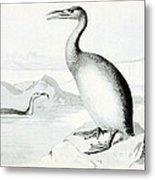 Hesperornis Regalis, Flightless Bird Metal Print