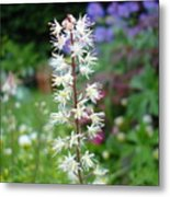 Heucharella - Fairy Bells Metal Print