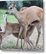 Hey, Can I Have Some? Metal Print