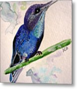 hHUMMINGBIRD 2   Metal Print