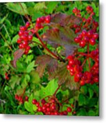 Hi Bush Cranberry Close Up Metal Print