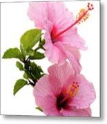Hibiscus 7 V3 Metal Print