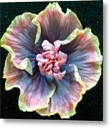 Hibiscus 9 Metal Print