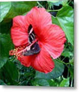 Hibiscus And Butterfly Diners Metal Print
