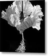 Hibiscus As Art 2 Metal Print
