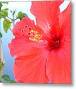 Hibiscus At Full Bloom Metal Print