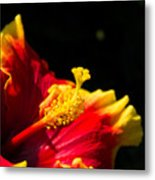 Hibiscus Bloom 3 Metal Print