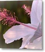 Hibiscus Bloom Pastel Metal Print