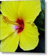 Hibiscus Flower 1 Metal Print