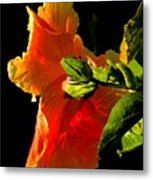 Hibiscus In The Light Metal Print