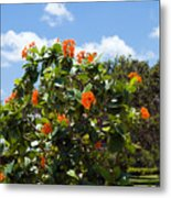 Hibiscus Rosasinensis With Fruit Metal Print