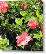 Hibiscus Tree Metal Print
