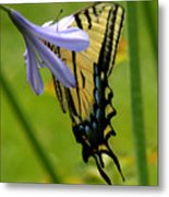 Hidden Beauty Metal Print