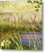 Hidden Grass Metal Print