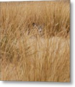 Hidden Mule Deer Metal Print
