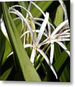 Hidden Swamp Lily Metal Print
