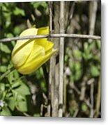 Hidden Yellow Tulip 02 Metal Print