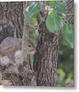 Hiding From The Camera Metal Print