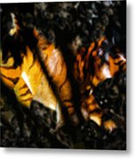Hiding Tiger Metal Print