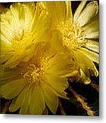 High Angle View Of Cactus Flowers Metal Print
