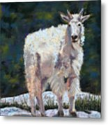 High Country Friend Metal Print