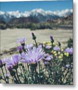 High Desert Wildflowers Metal Print