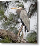 High In The Pine Metal Print