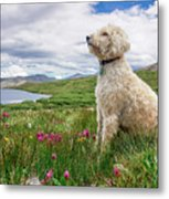 High Meadow With Eyes To The Sky Metal Print