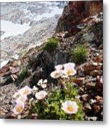 High Mountain Flowers Metal Print