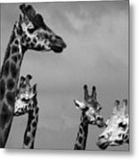 High Rise Chat Metal Print