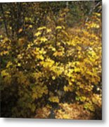 High Sierra Forest Color Metal Print