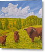 Highland Cattle Pasture Metal Print