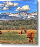 Highland Colorado Metal Print