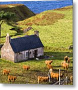 Highland Cottage With Highland Cattle Metal Print