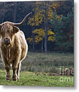 Highland Cow In France Metal Print