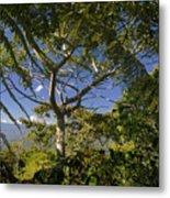 highlands in Costa Rica 2 Metal Print